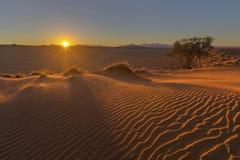 Zon starburst bij zonsondergang en wind geveegd zand op het duin royalty-vrije stock foto's