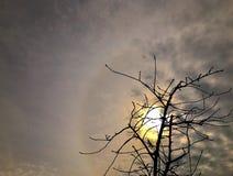 Zon Sunsetting door Bewolkte Hemel en Boom Stock Fotografie