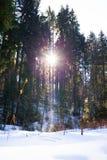 Zon tussen bomen stock foto's