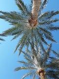 Zon van de palmen de blauwe hemel stock afbeelding