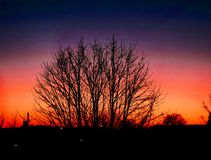 Zon van mijn dak wordt geplaatst dat! Silhouet van een boom Royalty-vrije Stock Foto
