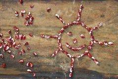 Zon van rode en witte bonen Stock Foto