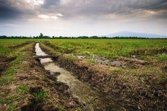 Zona agricola in Tailandia del Nord Immagine Stock Libera da Diritti