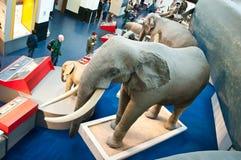 Zona blu del museo di storia naturale Immagini Stock Libere da Diritti