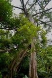 Zona de recreo del bosque del Estado de Zhiben, Taiwán Fotografía de archivo