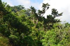 Zona de recreo del bosque del Estado de Zhiben, Taiwán Imagen de archivo libre de regalías