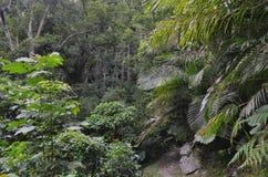 Zona de recreo del bosque del Estado de Zhiben, Taiwán Imagen de archivo