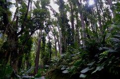 Zona de recreo del bosque del Estado de Zhiben, Taiwán Imagenes de archivo