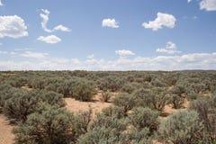 Zona del deserto Fotografia Stock Libera da Diritti