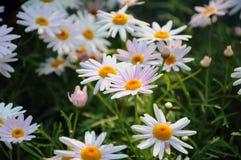 Zona del fiore Fotografia Stock