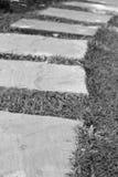 Zona del fondo en el césped Imagenes de archivo