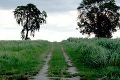 Zona del prado en rural Foto de archivo libre de regalías
