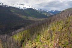 Zona dell'incendio forestale, sosta nazionale del ghiacciaio Fotografie Stock Libere da Diritti