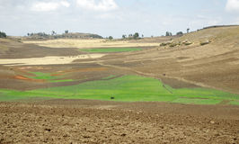 Zona di agricoltura - Etiopia Immagine Stock Libera da Diritti