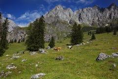 Zona di montagna di Hochkoenig Fotografie Stock