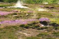 Zona geotermica Haukadalur Immagine Stock