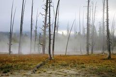 Zona geotermica, Yellowstone fotografia stock