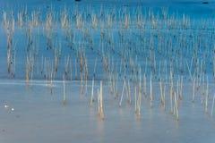 A zona intertidal litoral imagens de stock