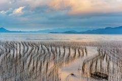 A zona intertidal litoral fotografia de stock royalty free