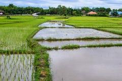 Zona produttrice del riso Fotografia Stock Libera da Diritti