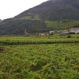 Zona produttrice di frutticoltura a Bolzano di estate 2017 immagini stock