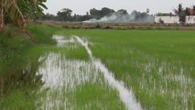 Zona rurale della Tailandia video d archivio