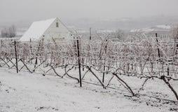 Zona rurale della vigna nell'inverno fotografie stock