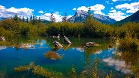Zona umida banff di paludi con la montagna Immagini Stock