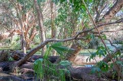 Zona umida boscosa Immagine Stock Libera da Diritti