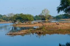 Zona umida della foresta Immagini Stock Libere da Diritti