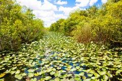 Zona umida di Florida, giro del Airboat al parco nazionale dei terreni paludosi in U.S.A. Fotografie Stock Libere da Diritti