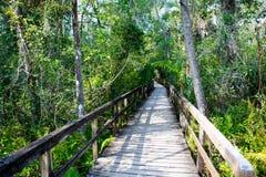 Zona umida di Florida, traccia di legno del percorso al parco nazionale dei terreni paludosi in U.S.A. Fotografia Stock