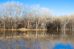 Zona umida e foresta in molla molto in anticipo a Bosque del Apache Immagine Stock