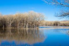 Zona umida e foresta in molla molto in anticipo a Bosque del Apache nel New Mexico Fotografia Stock