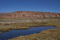 Zona umida nel parco nazionale di Lauca nel Cile fotografia stock libera da diritti