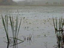 Zona umida, prerogativa della fauna selvatica Fotografie Stock