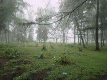 Zona verde Fotografia Stock
