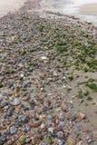 Zonas costeras llenadas de las piedras Fotografía de archivo libre de regalías