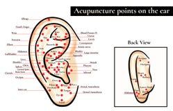 Zonas reflejas en el oído Puntos de la acupuntura en el oído Mapa de a Imagenes de archivo