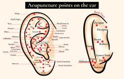 Zonas reflejas en el oído Puntos de la acupuntura en el oído Mapa de a Fotos de archivo