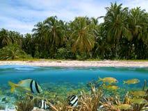Zonas tropicales Fotografía de archivo