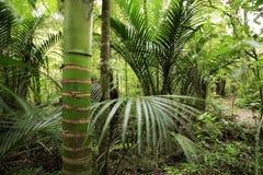 Zonas tropicales Imagen de archivo libre de regalías