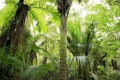 Zonas tropicales Fotografía de archivo libre de regalías