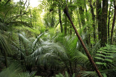 Zonas tropicales Imágenes de archivo libres de regalías