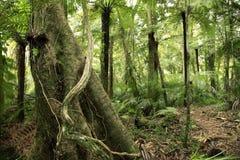 Zonas tropicales Imagenes de archivo