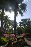 Zonas tropicales de la sol fotografía de archivo libre de regalías