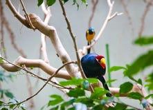Zonas tropicales de los pájaros Parque zoológico Tokio Japón de Ueno Fotos de archivo