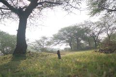 Zonbad voor bomen royalty-vrije stock fotografie