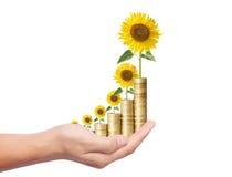 Zonbloem het groeien van muntstukken Stock Afbeelding