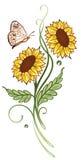 Zonbloemen, de zomertijd Stock Afbeelding